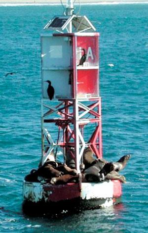 고래 관광에서는 부이 위에서 일광욕을 즐기는 바다사자 등 별도의 볼거리를 제공한다