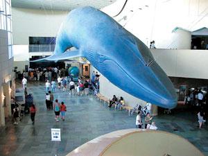 대형 고래모형 및 각종 바다생물들을 만날 수 있는 롱비치 수족관